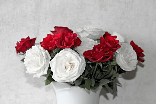 bílo-červené růže